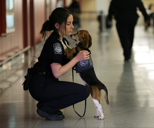 A Customs and Border Protection Agricultural Specialist hugs an agricultural detector beagle at John F. Kennedy International Airport.