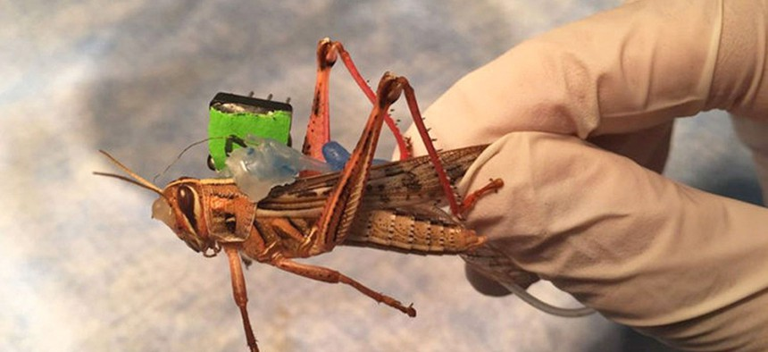Last week, the US Office of Naval Research awarded researchers at the University of Washington in St. Louis, Missouri $750,000 over three years to alter locusts to remotely sense bombs and other explosive devices.