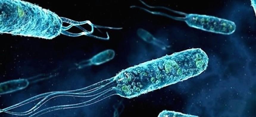 Marinobacter