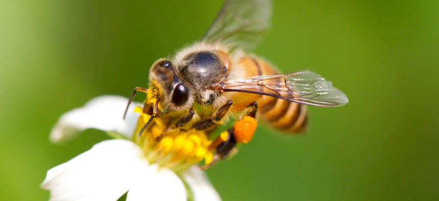 In the summer time, a lovely honey bee is busy for collecting nectar on the flower.