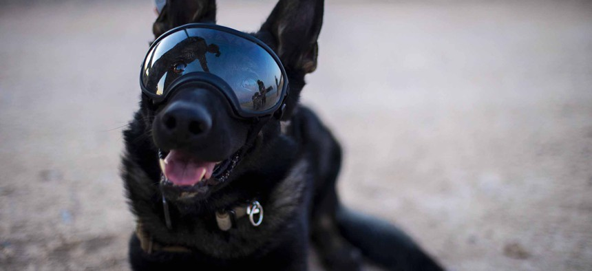 Nick, an Army military working dog photographed at Iraq's Al Asad Air Base on May 29, 2020, is wearing cool shades, not AR goggles. But someday he might.