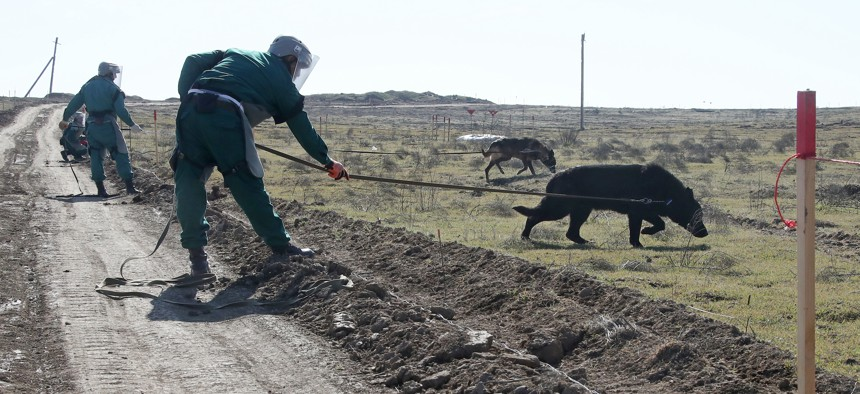 Officers of the Azerbaijan National Agency for Mine Action (ANAMA) demonstrate mine clearing with dogs in the Fuzuli District in February 2021.