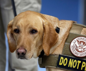 Eette, a Labrador Retriever and Vizslas mix, stands next to her handler, TSA inspector Jasmine Bourne, before heading to a security checkpoint for a demonstration in 2016.